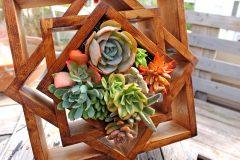 Jardin Vertical, Cuadro vivo Suculentas de madera, modelo Madalera